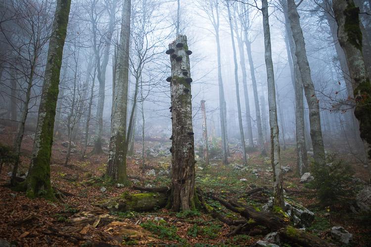 Bijele_stijene-27