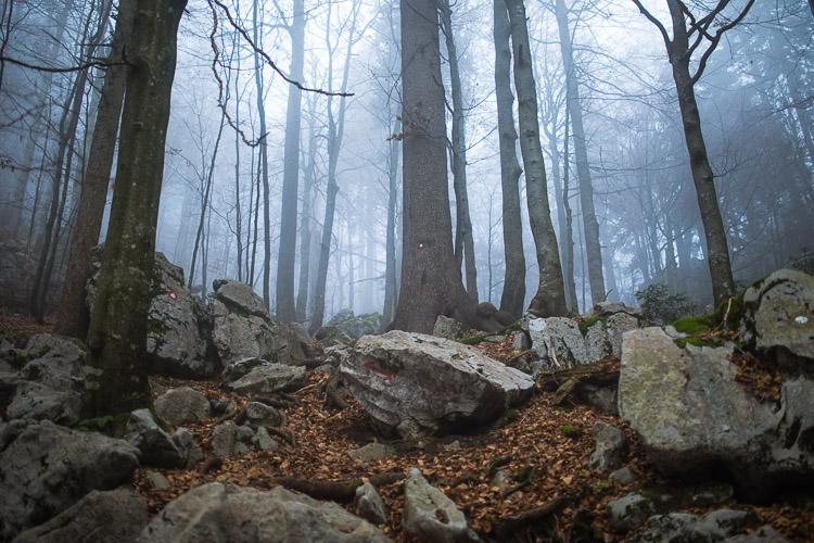 Bijele_stijene-29