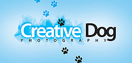 Creative dog photography